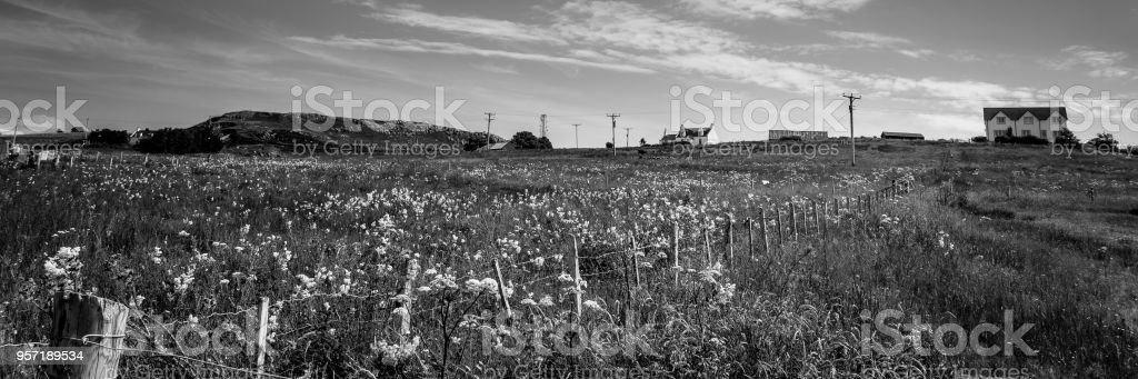 Meadow with wild flowers black and white stock photo