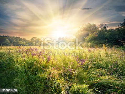 istock Meadow with wildflowers under the bright sun 926681406