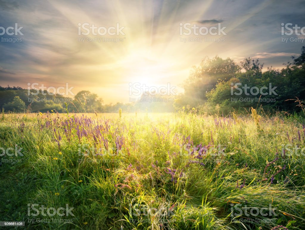 Meadow with wildflowers under the bright sun stock photo
