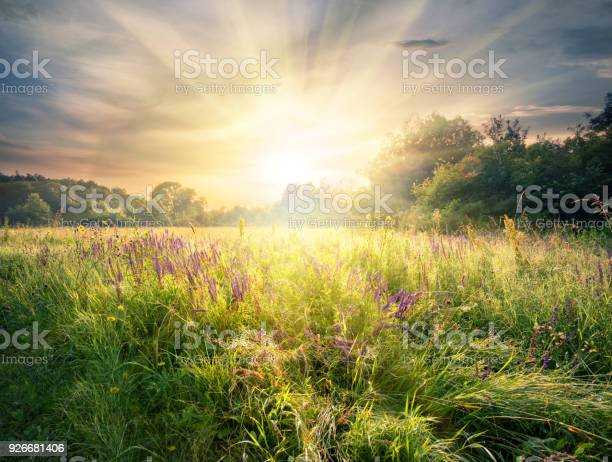Photo of Meadow with wildflowers under the bright sun