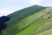 istock Meadows and Sheep 468516971