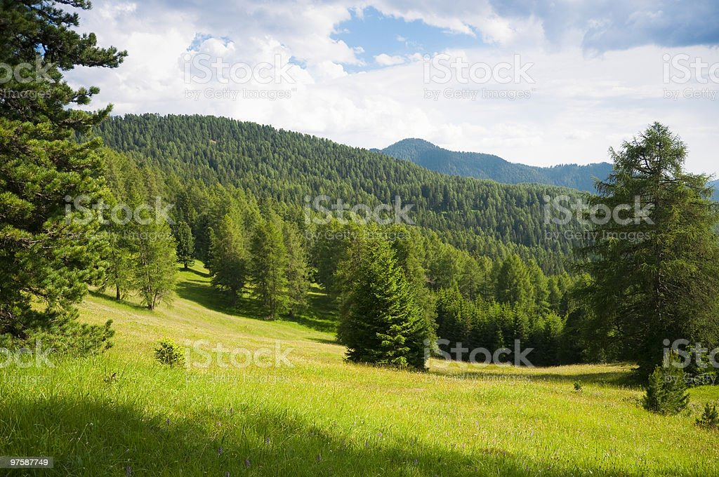 Meadows and woods of early summer royalty-free stock photo