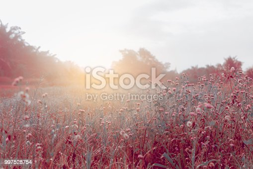 meadows at sunrise at nature background