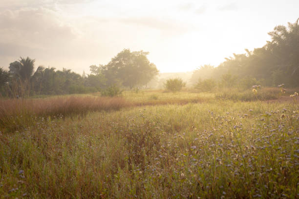 meadows at sunrise summer nature background - soft focus stock photos and pictures