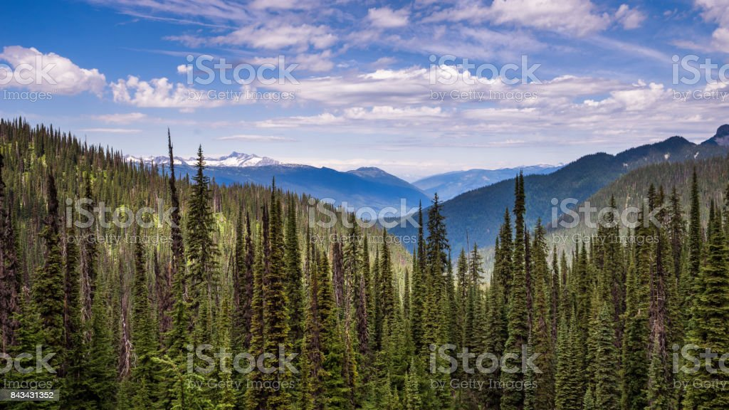 Meadows In The Sky View of trees and mountains from a hiking trail in Mount Revelstoke National Park, BC, Canada BC Stock Photo