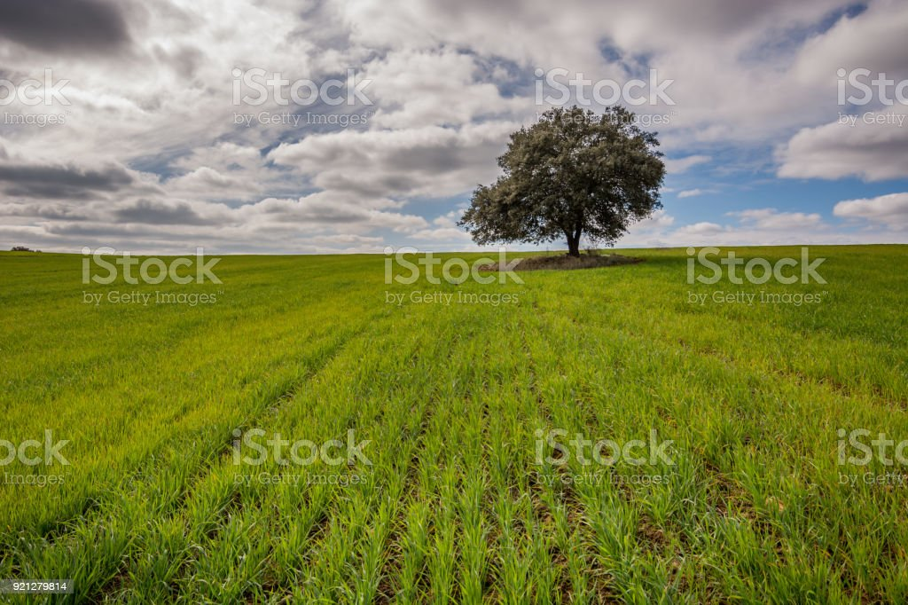 Meadows of boil fresh green, tree and a sky with clouds stock photo