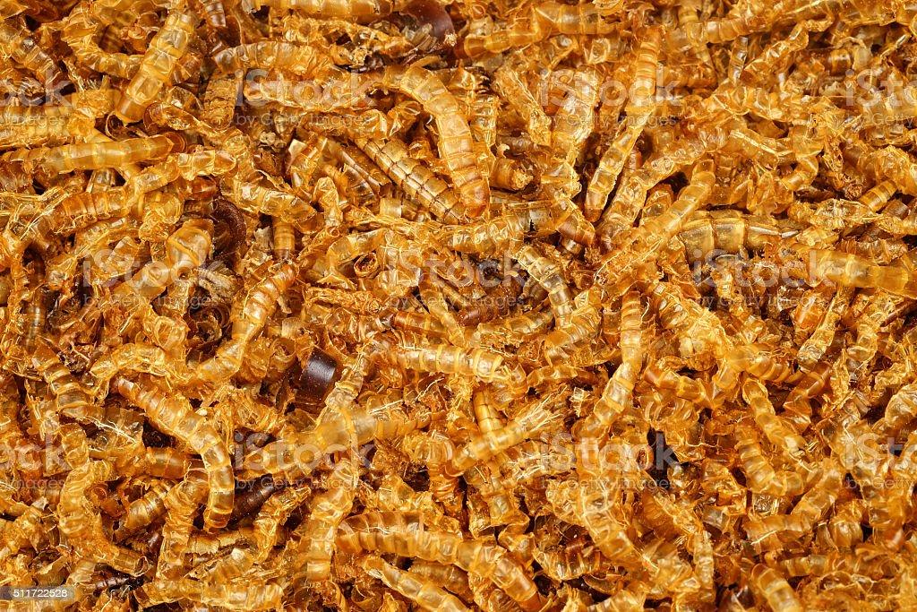 mealworm dead stock photo