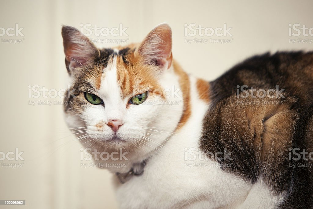 Mean Looking Cat stock photo