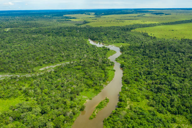 meandering jungle river in the rainforest of the congo basin - republic of the congo stock photos and pictures