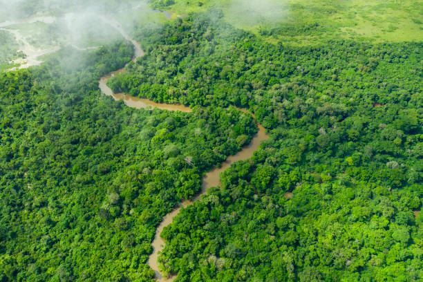 Meandering jungle river in the rainforest of the Congo Basin stock photo