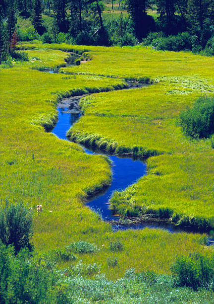 Meandering Stream Through A Meadow stock photo