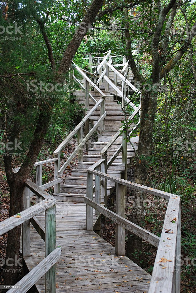 Meandering Wooden Boardwalk Climbs Uphill in Shaded Woodland Forest stock photo