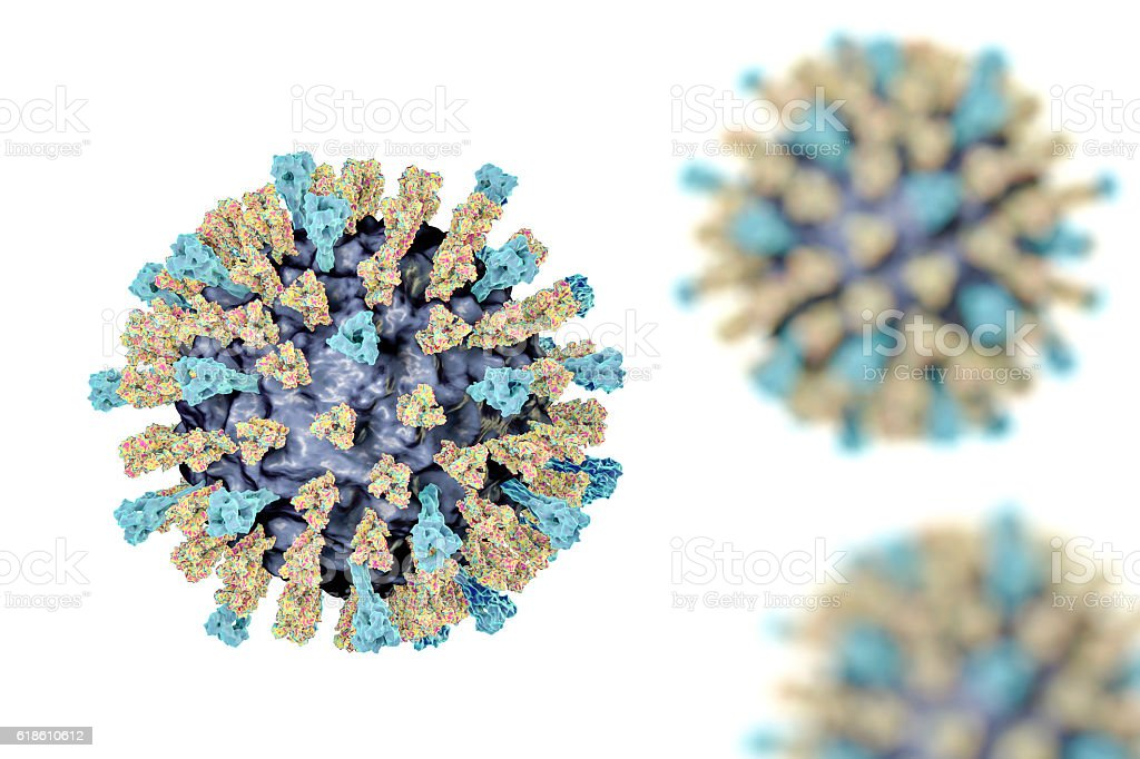 Measles virus illustration Measles virus. 3D illustration showing structure of measles virus with surface glycoprotein spikes heamagglutinin-neuraminidase and fusion protein Bacterium Stock Photo