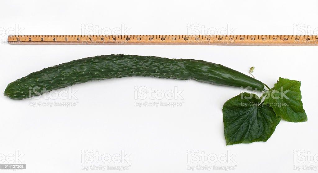 Measured English Cucumber stock photo