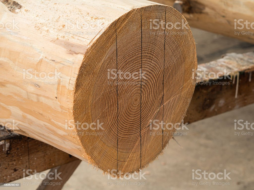 measured wood logs stock photo