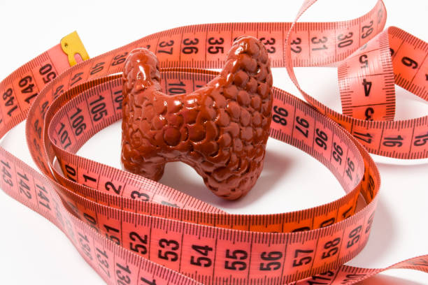 Measurement of thyroid as definition of symptom or sign of disease, e.g. enlarged thyroid. Thyroid model wrapped by measuring tape. Visualization symptom  of enlargement with goitre iodine deficiency stock photo