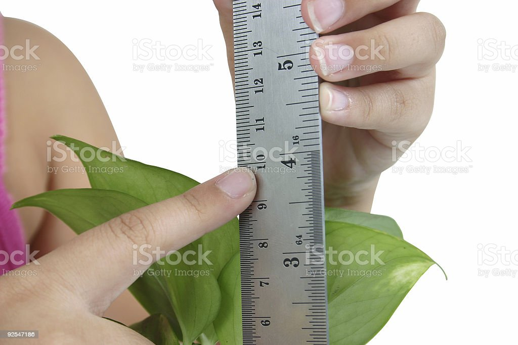 measuring a plant royalty-free stock photo