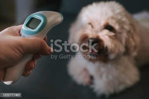 istock measuring body temperature using digital infrared thermometer for prevention and security measurement precaution on dig 1222777401