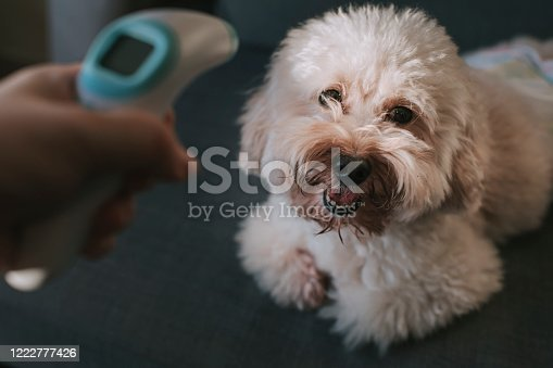 istock measuring body temperature using digital infrared thermometer for prevention and security measurement precaution on dig 1222777426