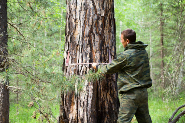 measuring the diameter of a tree - diameter stock pictures, royalty-free photos & images