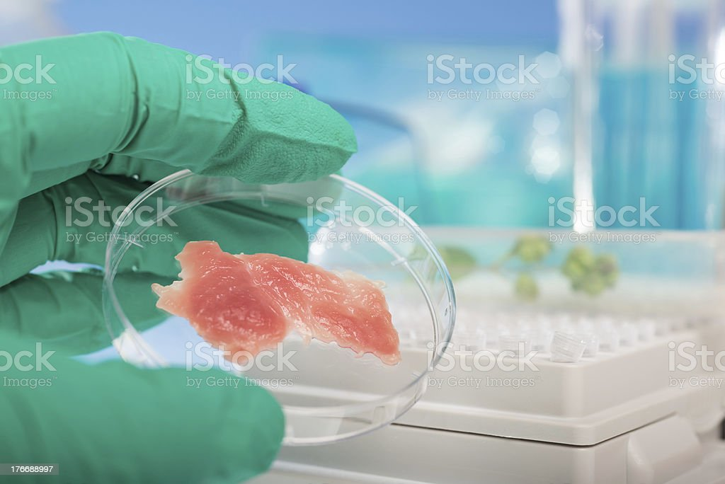 Meat grown up in culture dish stock photo