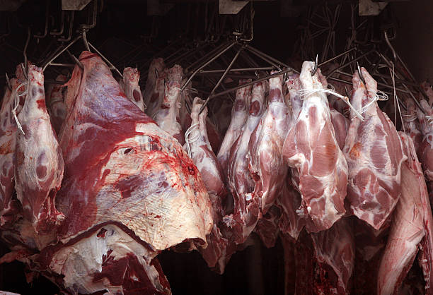 meat - kühlraum stock-fotos und bilder