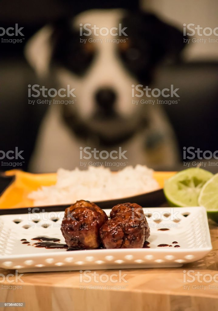 Meatballs on plate with rice and cute dog watching in background stock photo