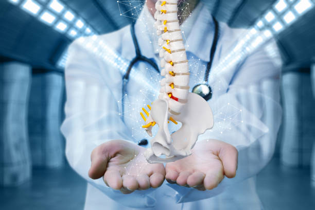 Medic shows the spine . stock photo