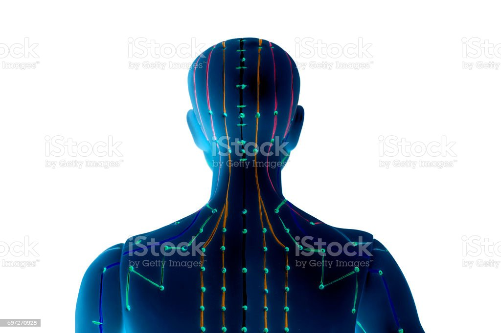 Medical acupuncture model of human on white background royalty-free stock photo