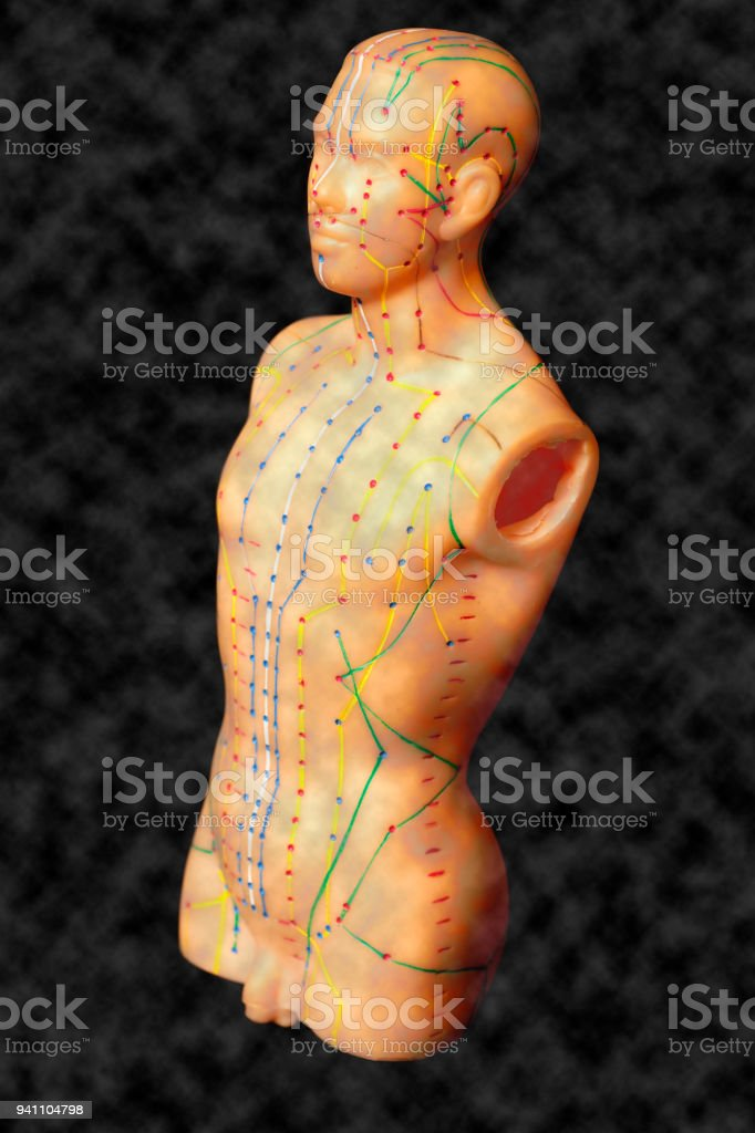 Medical Acupuncture Model Of Human Stock Photo & More Pictures of ...