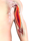 istock Medical and Scientific Graphic background, Bicep Muscular 3d illustration. 840587894