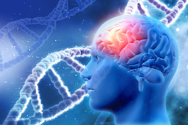 3D medical background with brain and DNA strands stock photo