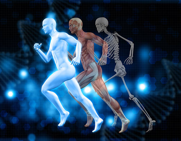 3D medical background with male figure in running pose stock photo