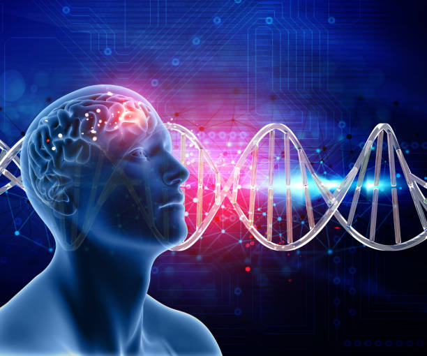 3d medical background with male head and brain on dna strands - genetic research stock pictures, royalty-free photos & images