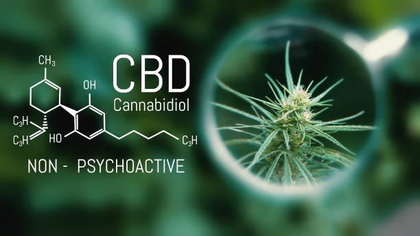 Medical cannabis and cannabidiol cbd oil chemical formula growing picture id1137522741?b=1&k=6&m=1137522741&s=612x612&w=0&h=vfhr4ncia 5bpc5haa8wwlldosdy2ig 71nd2yol4be=