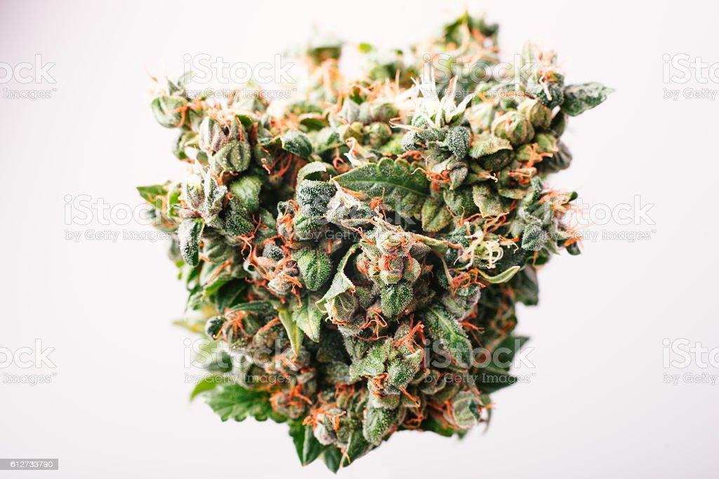 Medical cannabis bud stock photo