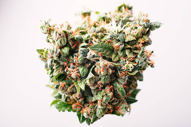 Medical cannabis bud - Photo
