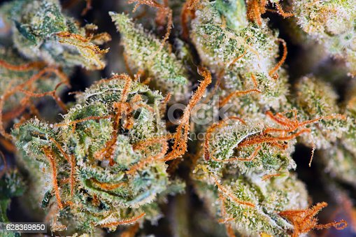 Close up of bud of cannabis with whispy pistils