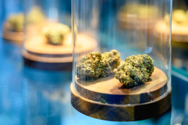 high grade cannabis