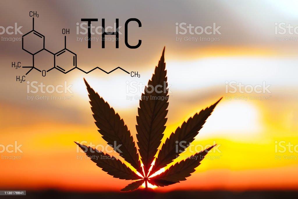 Medical Chemical Formula Hemp Thc Molecular Structure Marijuana Tetrahydrocannabinol Medical Cannabis Is Used In Ayurveda Stock Photo Download Image Now Istock