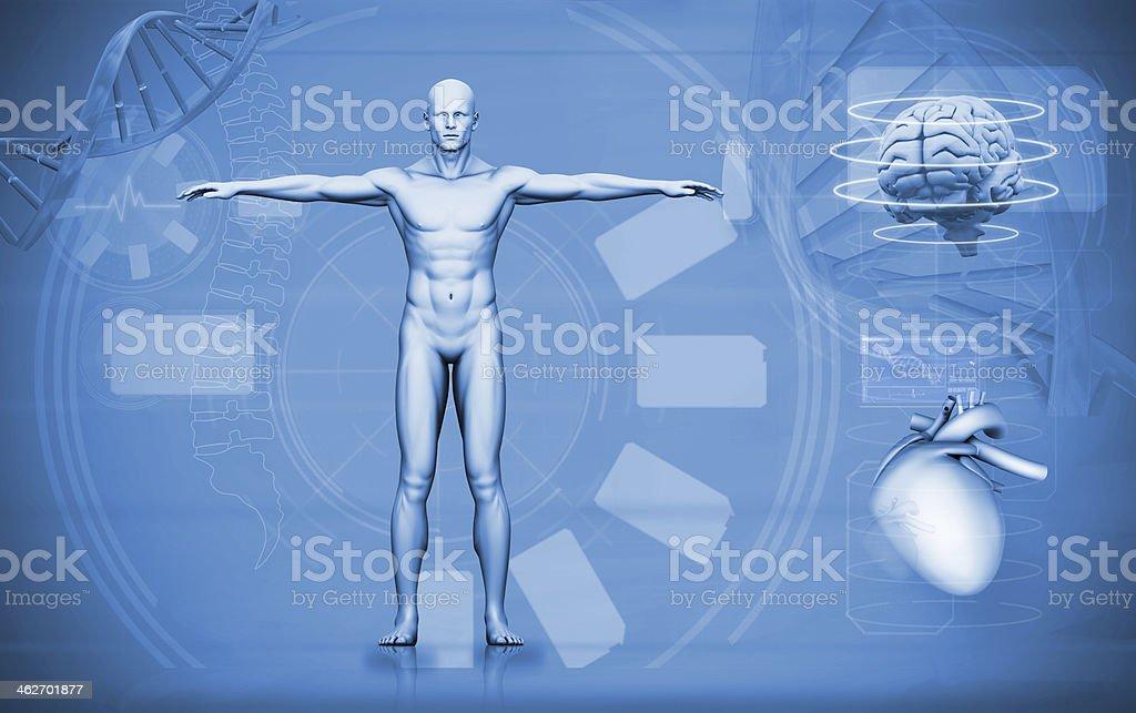 Medical digital interface of human figure brain and heart stock photo