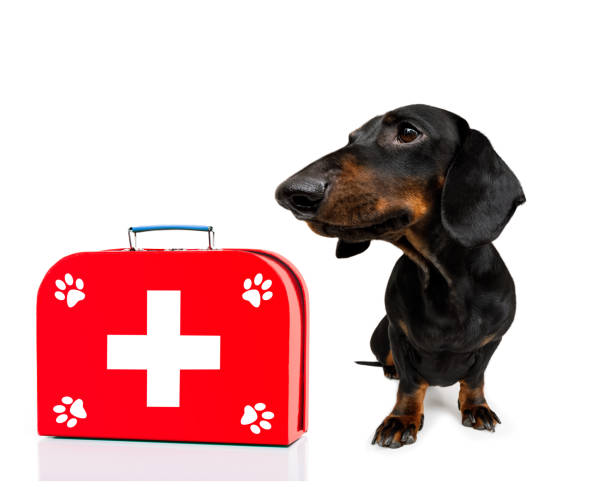 medical doctor dog stock photo