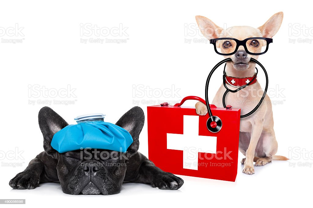 medical doctor sick and ill dogs stock photo