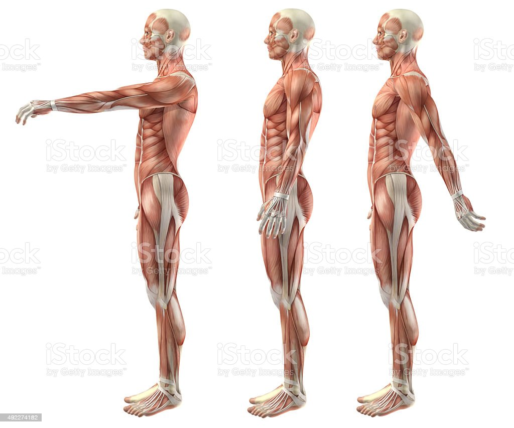 3D medical figure showing shoulder flexion, extension and hypere stock photo