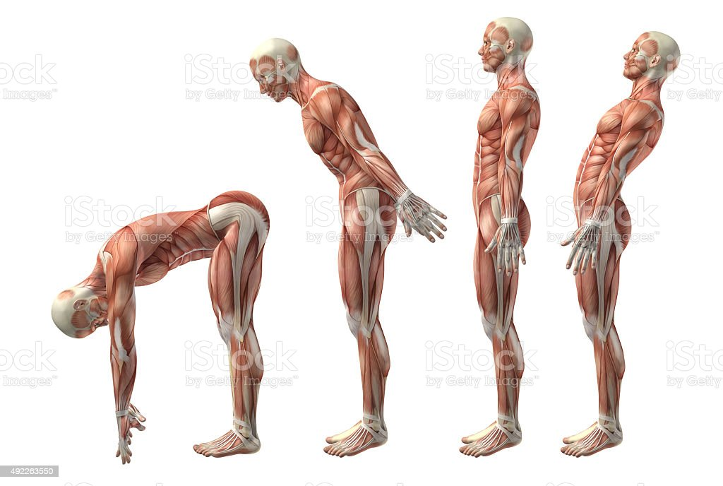 3D medical figure showing trunk flexion, extension and hyerexten stock photo