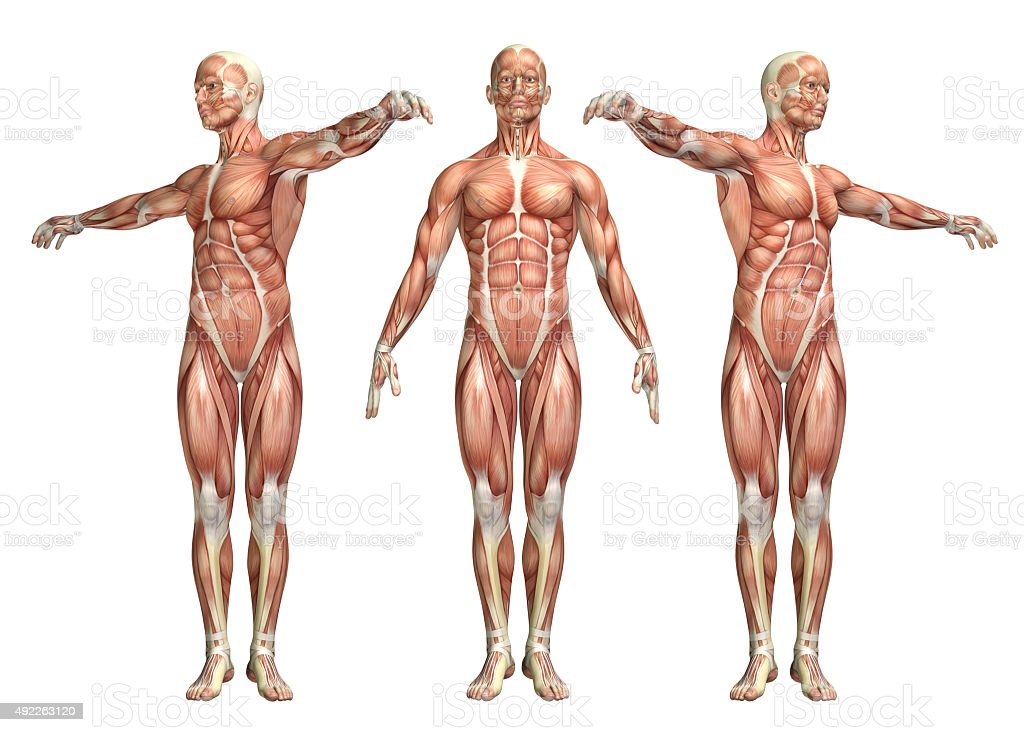 3D medical figure showing trunk rotation stock photo