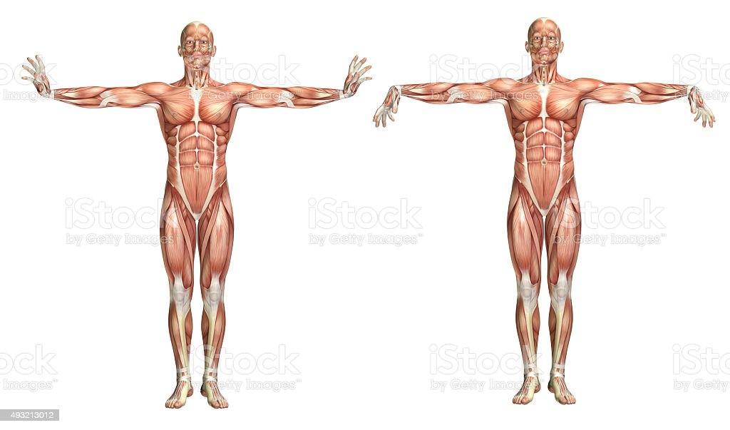 3d Medical Figure Showing Wrist Extension And Flexion Stock Photo