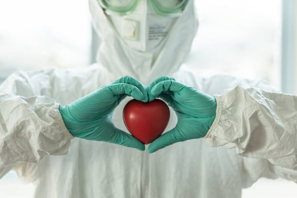 Medical health care, life insurance, organ donor charity donation, world heart health day concept with doctor in ppe personal protective equipment holding heart  in hospital lab stock photo