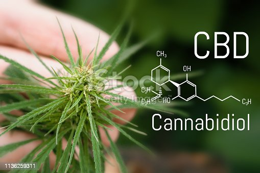 istock Medical hemp and Cannabidiol CBD oil chemical formula. Growing marijuana top quality products. Concept of the use of cannabis oil for therapeutic purposes 1136259311