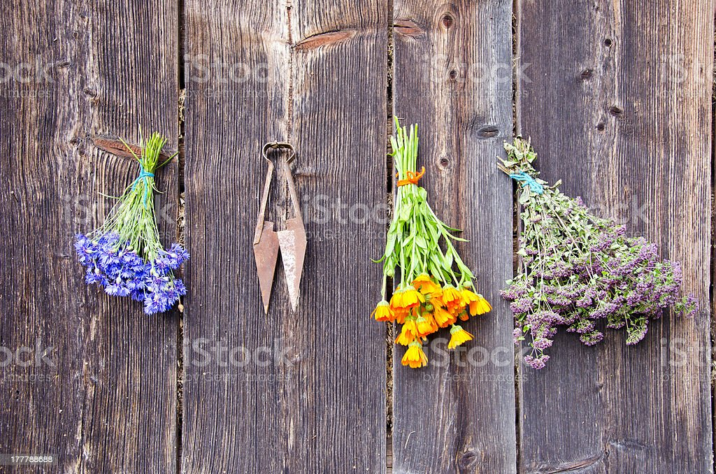 medical herbs bunches on old wooden wall royalty-free stock photo